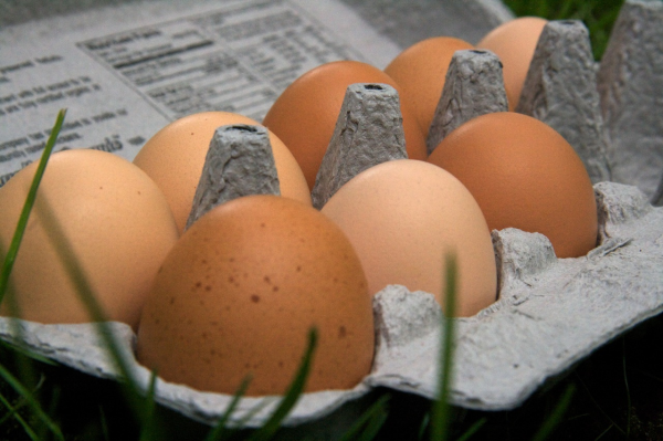 healthy pastured eggs