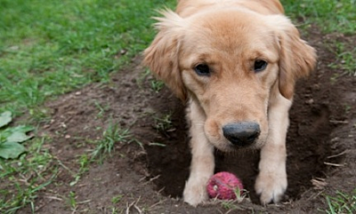 4 Ways to Curb Your Dog's Urge to Dig