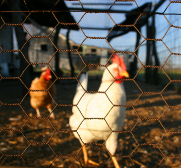chicken pen fence 1