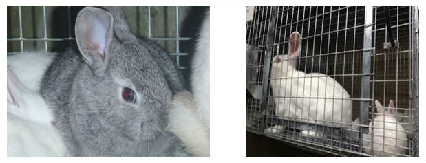 Baby saver rabbit cage with rabbits