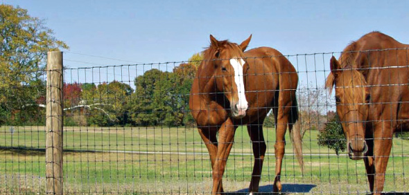 Wire Mesh Horse Fence