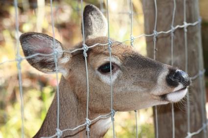 Deer Amp Wildlife Fence