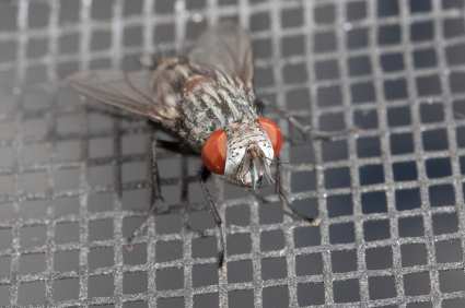 fly on aluminum screen door