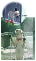 A Dog and Cat Proof Screen Door Prevents Screen Door Repair