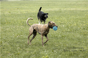 Monkey, toy thief extraordinaire, gets a run from Grover.