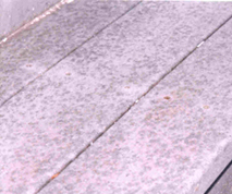 composite decking with mildew