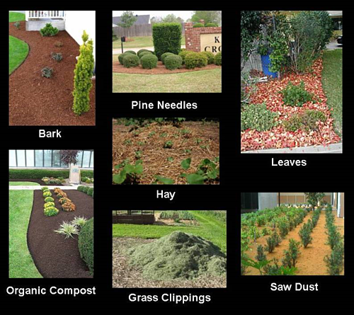 What Is The Difference Between Mulch Compost And Bark