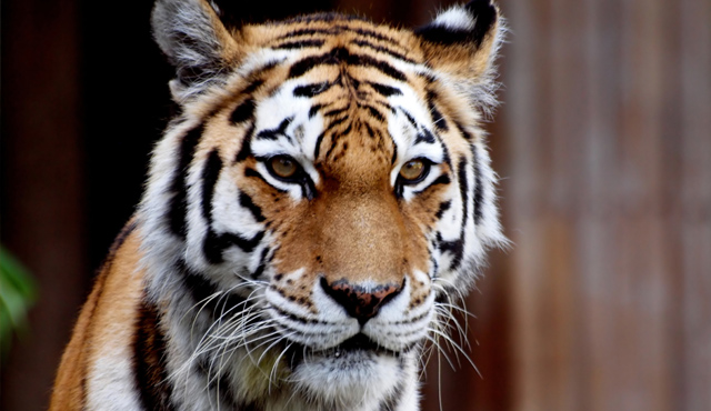 "Have you lost ""the eye of the tiger"" when it comes to youth ministry?"