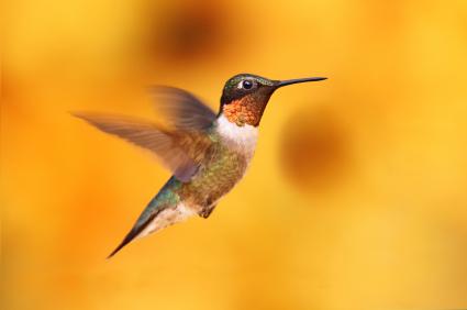 hummingbird algorithm updates