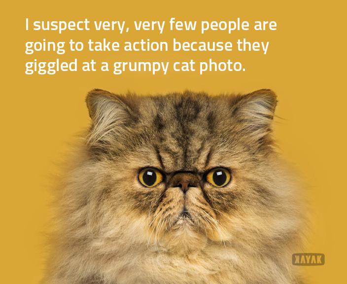 a grumpier cat