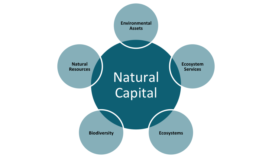 Monetary Value On Natural Resources