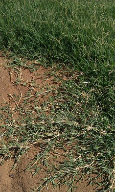 Lawn Care Mistakes 16 Things Not To Do
