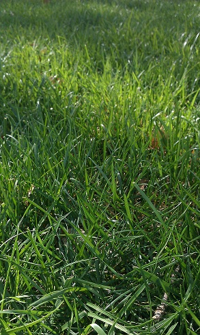 benefits of spring aeration and over seeding watertown ny