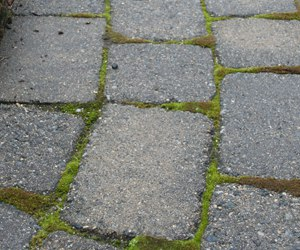 Attractive What Is Polymer Sand For Pavers?