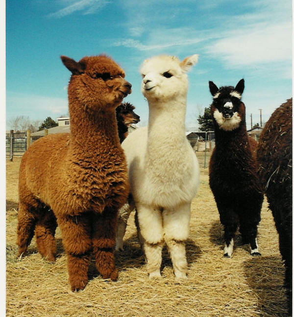 Anchors and Alpaca