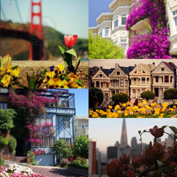Spring Is In San Francisco, So Come Smell The Flowers