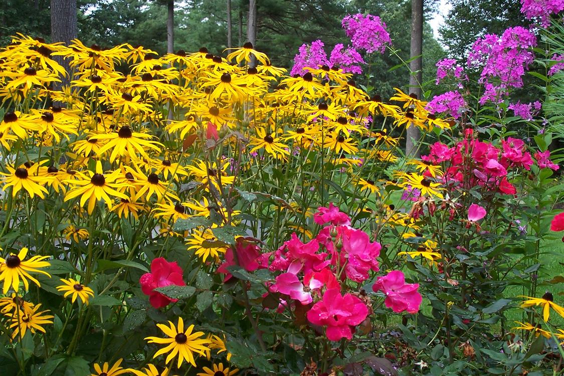 Roses In Garden: Contact The Garden Continuum