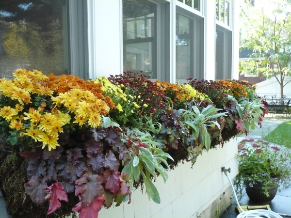 Outdoor Fall Planter Ideas http://www.thegardencontinuum.com/galleries/annuals/?Tag=Fall%20Planter%20Ideas