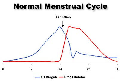 bioidentical-hormone-therapy-cycling