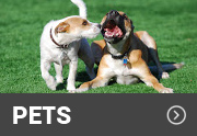 two dogs on an artificial turf