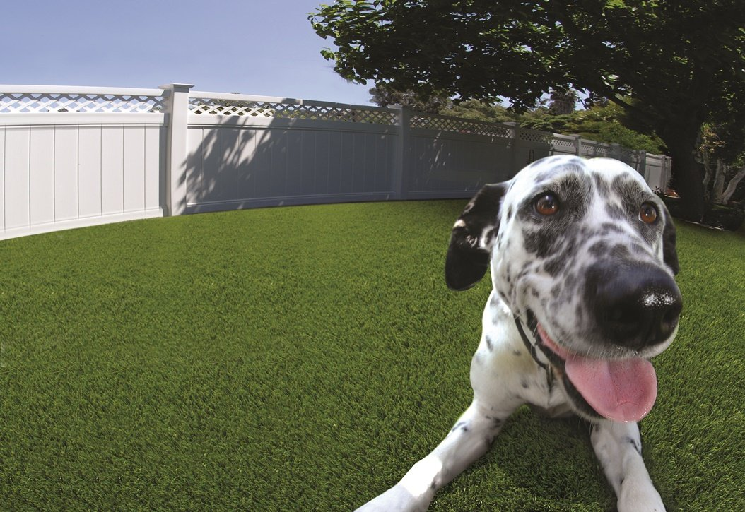 artificial grass with a dog on top