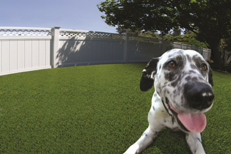 artificial grass with a dog on it