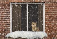 cat looking out window at snow.jpg