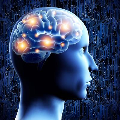 Vitamin D and fish oils control brain serotonin