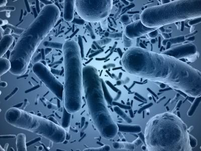 Autism gut bacteria study