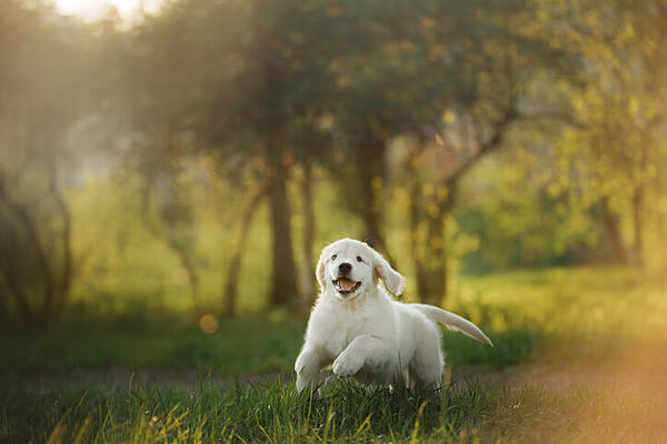 happy-puppy-running