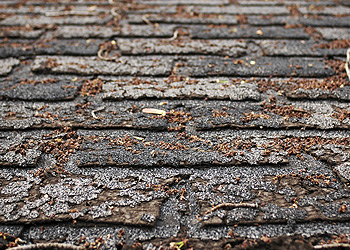 Reasons & Observations for Shingle Roof Replacement