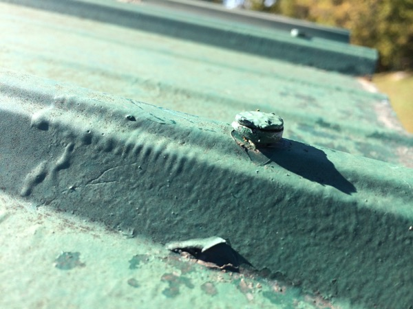 Metal Roof Repair 5 Common Causes Of Metal Roof Leaks