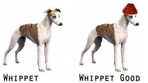 whippet-good