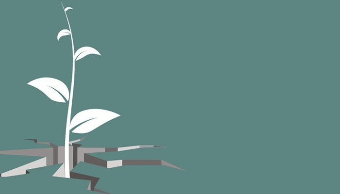The Service Manager Handbook: Go for Growth