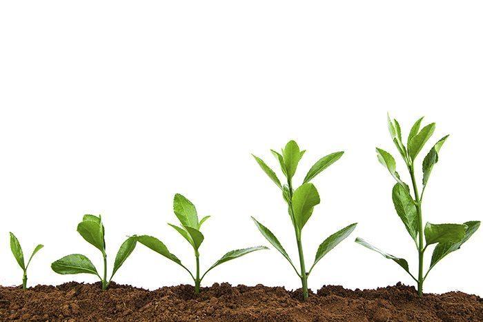 Seeds of success... UK field service company thinking big