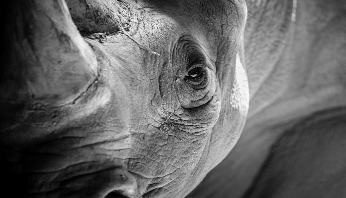 Connected by Service, and the African Rhino