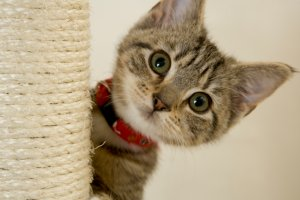 adorable kitten onstartups