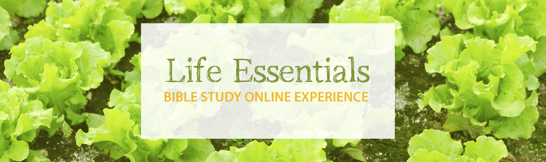 The Essential Study Bible: American Bible Society ...