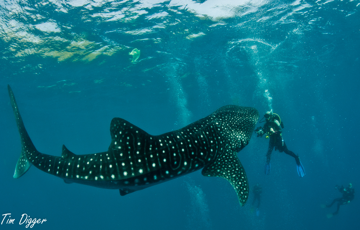 Oslob Whale Shark Watching (Philippines): Top Tips Before You Go ...