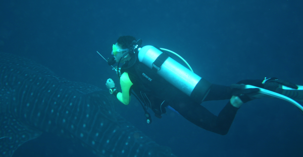 Dive master with whale shark