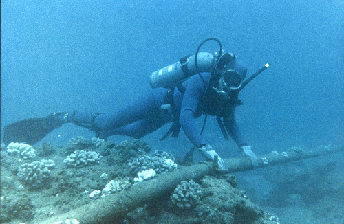 Scuba diver exploring the seabed