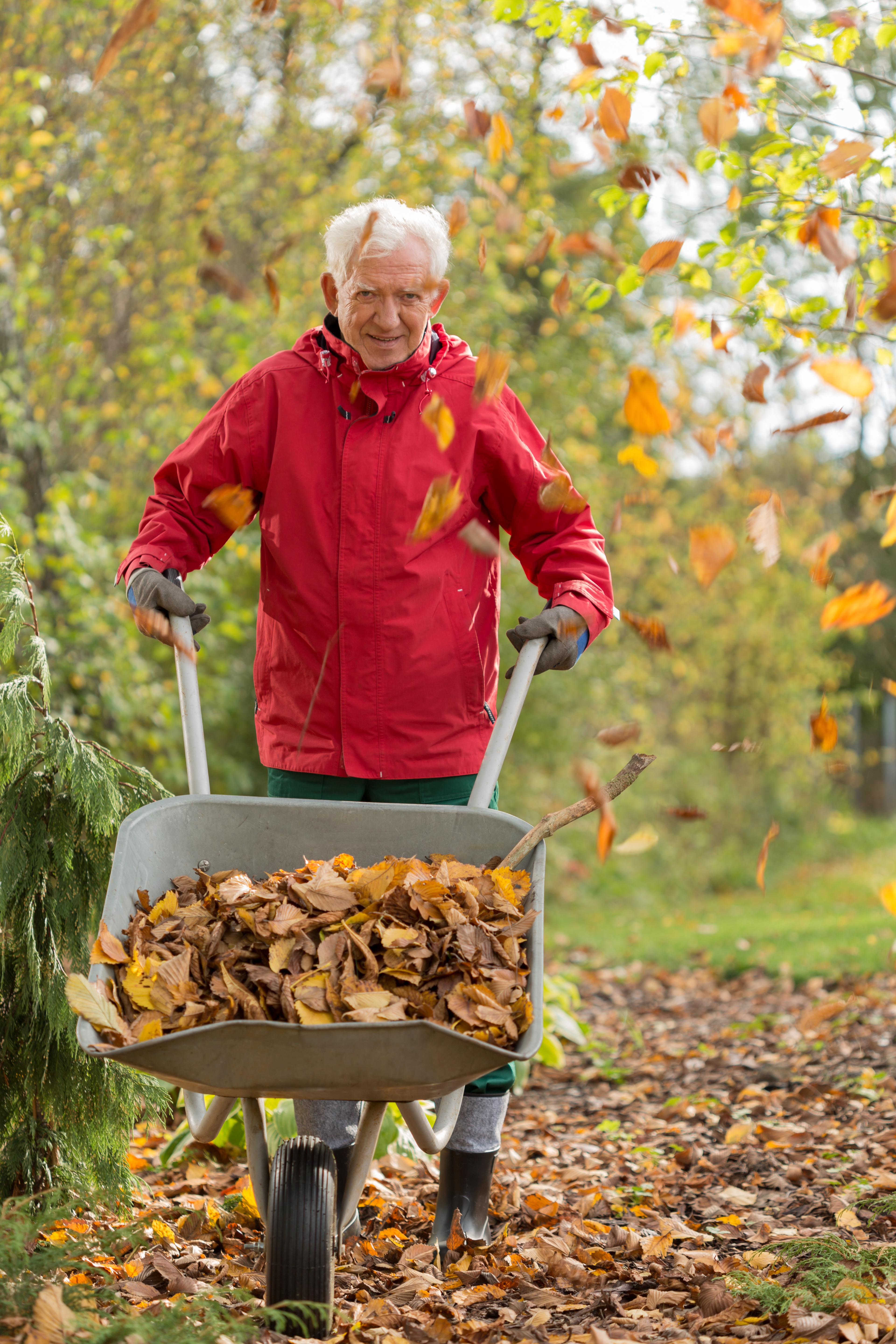 Older man raking.jpg