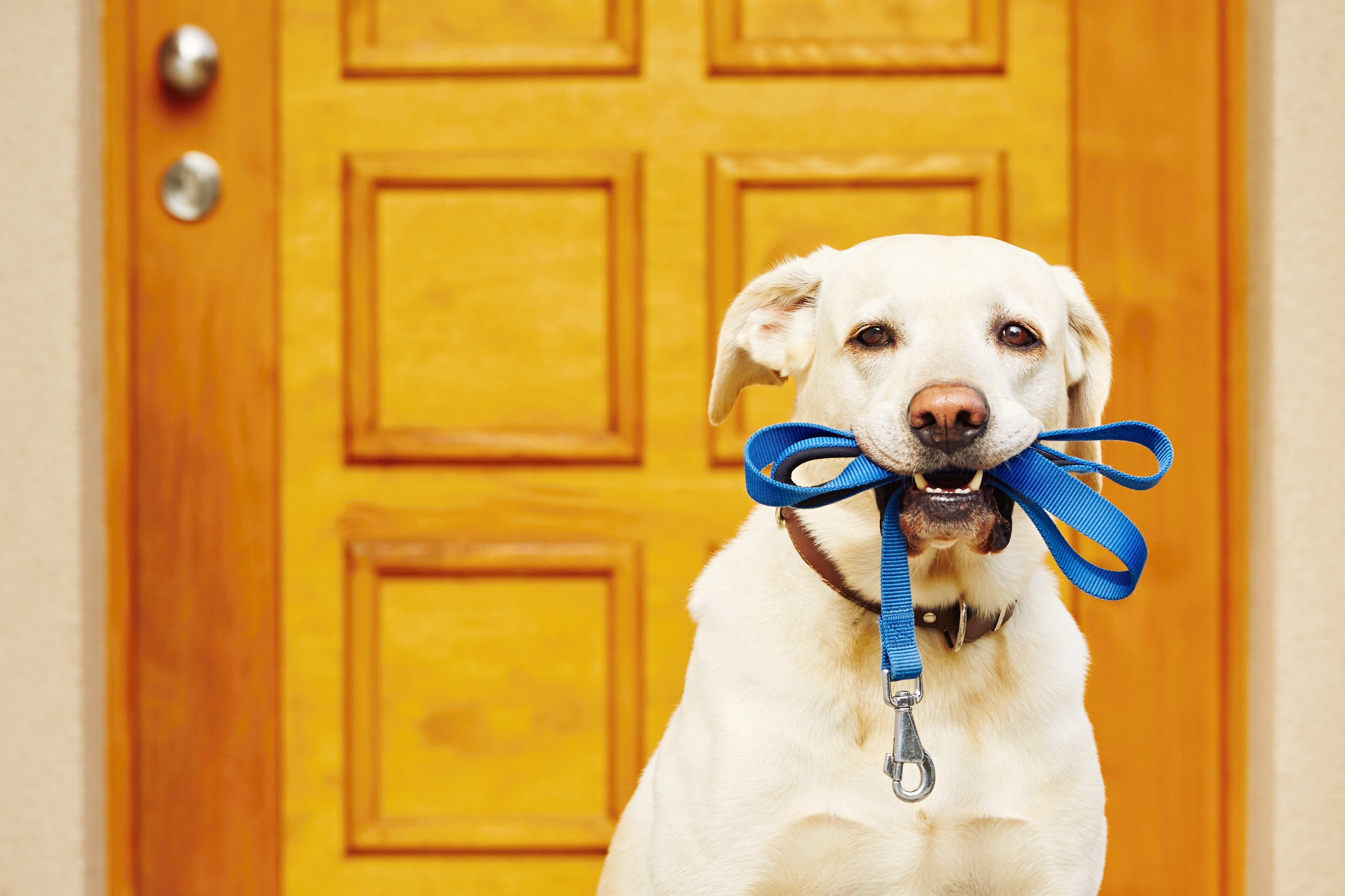 Walk the Dog.jpg