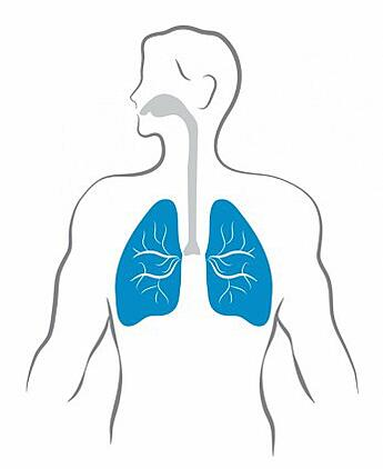 lungs_and_human_body_311974.jpg