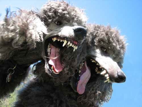 Maintaining Your Web Security: Yottaa's Response to POODLE