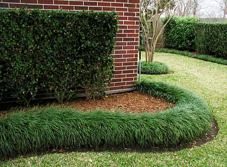 Mondo grass for Garden border plant designs