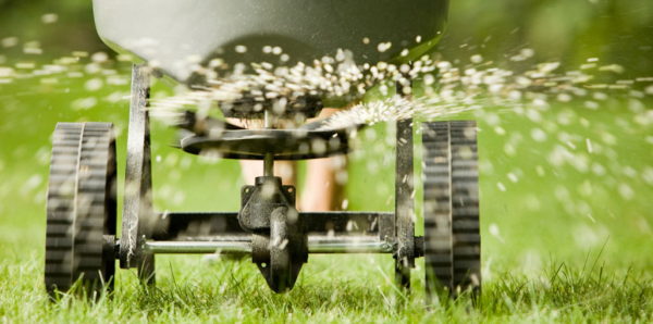 Scheduling Watering For Overseeding In The Tulsa Landscape