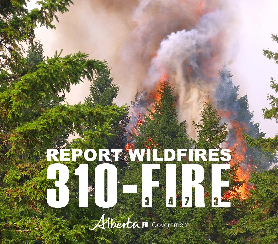 310fire_trees_on_fire
