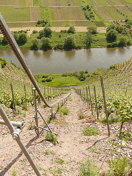 Mosel Vineyards