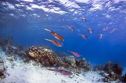 Discover more of Barbados' Coral Reefs and Shipwrecks
